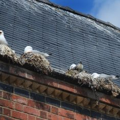 Nest Removal
