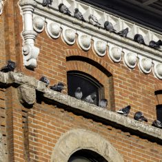 Pigeon Management