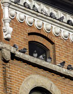 Pigeon Management