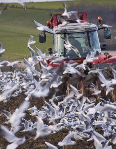 Seagull Management